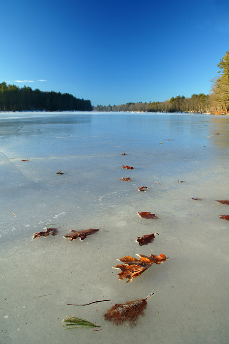Leaves embedded in the ice on the Androscoggin River