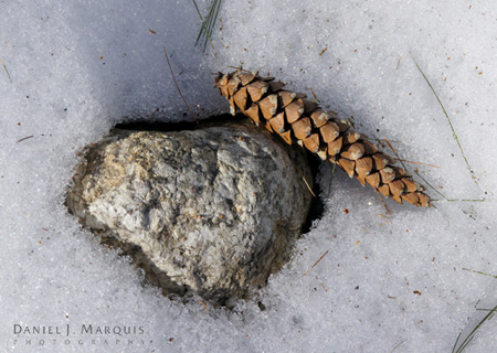 rock and pine cone on snow