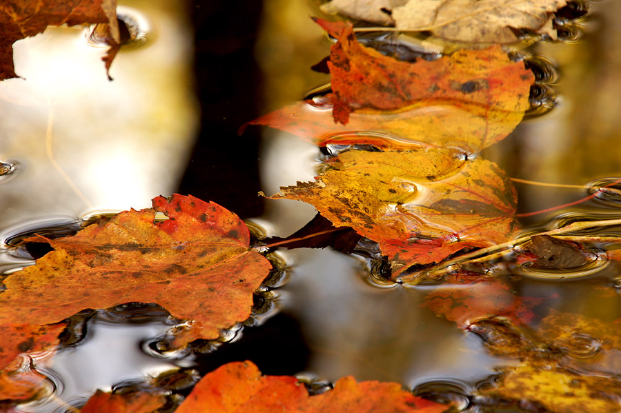 Colorful leaves floating on stream surface